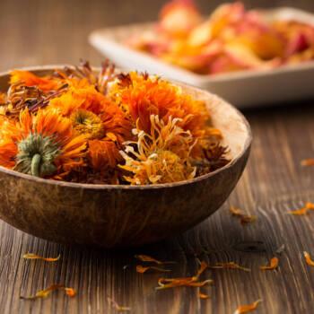 Calendula Flowers Ingredient Highlight