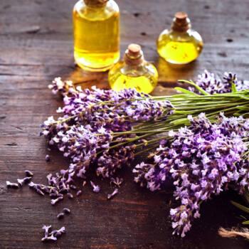 lavender oil ingredient highlight